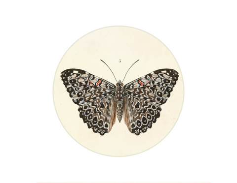 "Butterfly 1 - 6"" round"