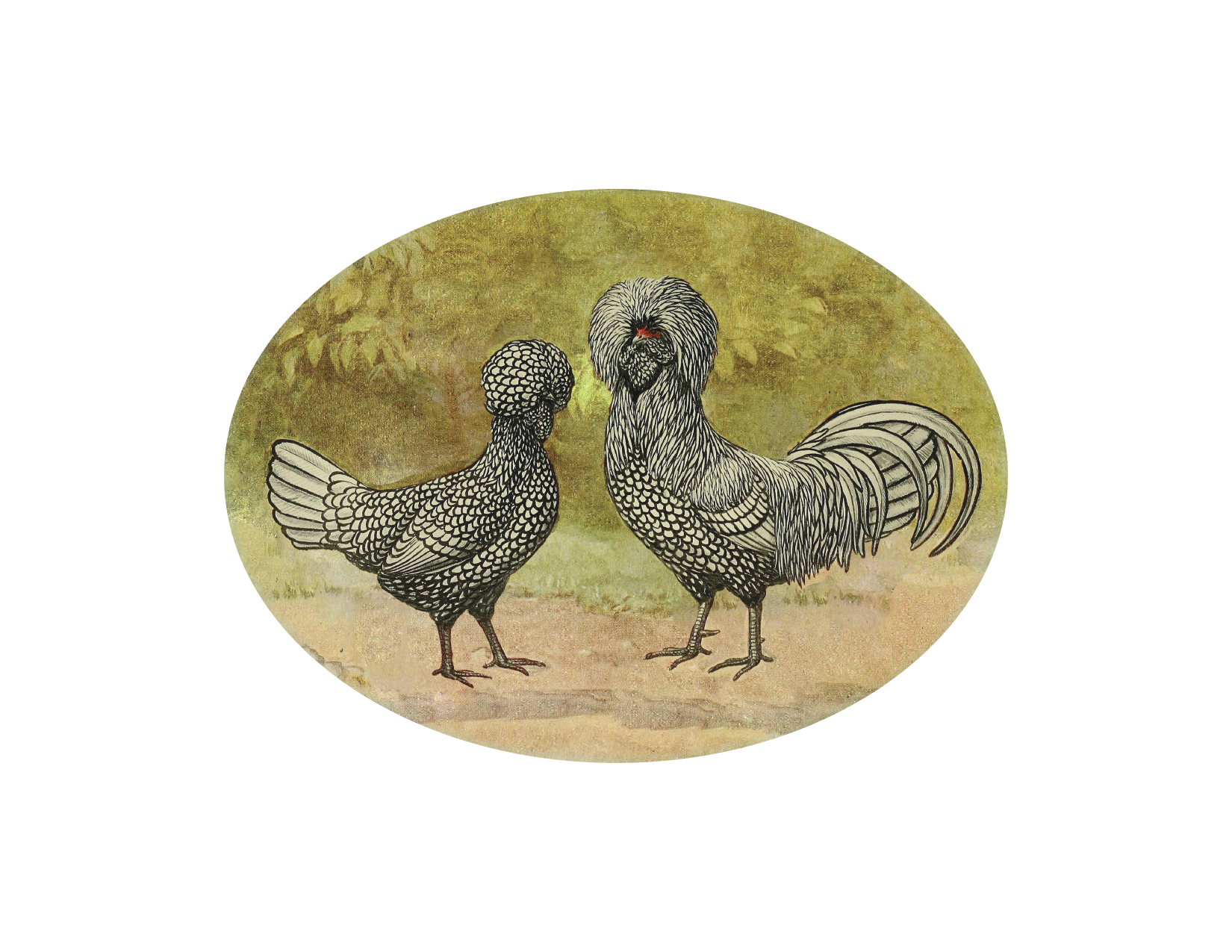 "Funny Chickens - 5x7"" oval"