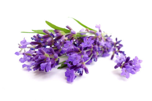 Garden of Eden Lavender Oil