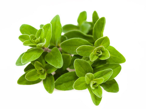 Garden of Eden Marjoram Oil