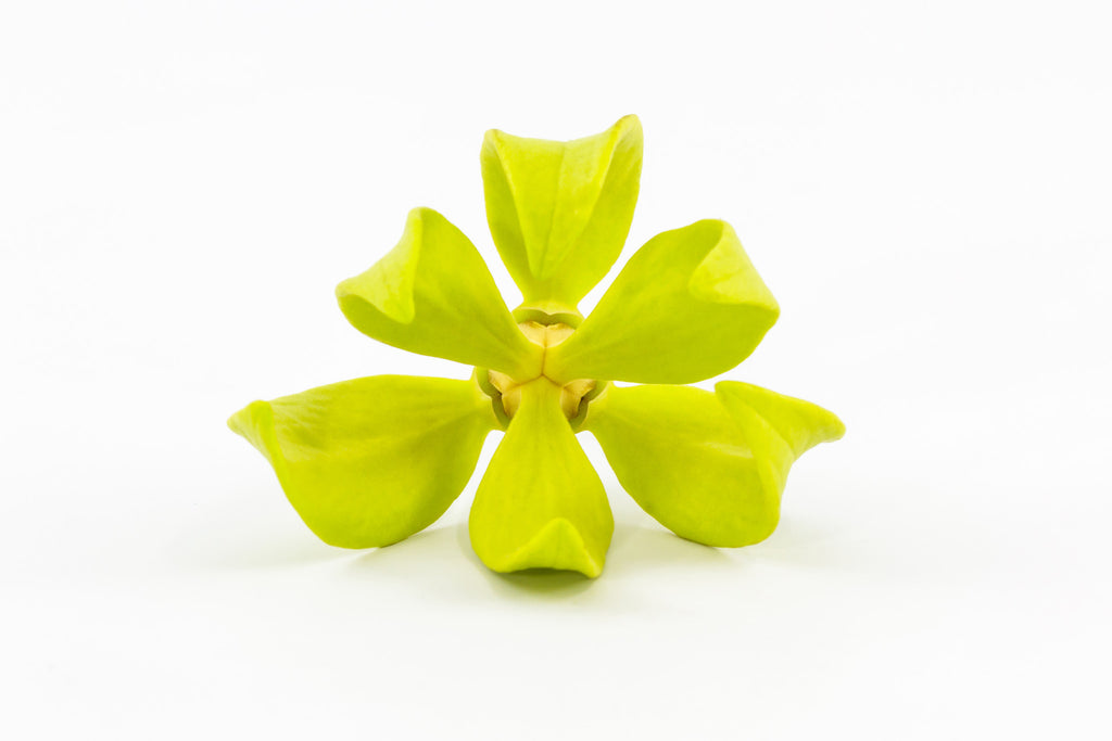 Garden of Eden Ylang Ylang Oil