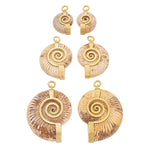 Solid Brass Madagascar Ammonite Ear Weights