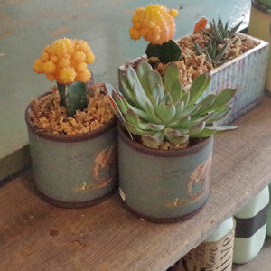 Succulents - Vintage Home Boutique - 7