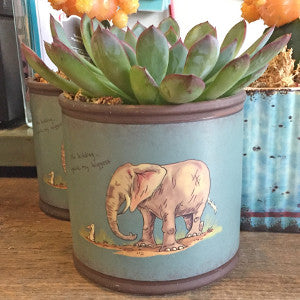 Succulents - Vintage Home Boutique - 5