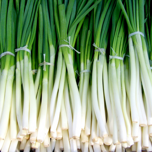 Spring Onion 1 bunch S/F