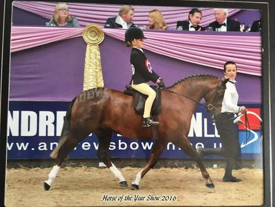 Hunter Pony Lead Rein Of The Year Goes To.....