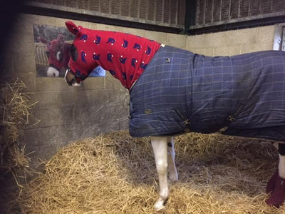 How To Keep Your Horse Warm In The Winter