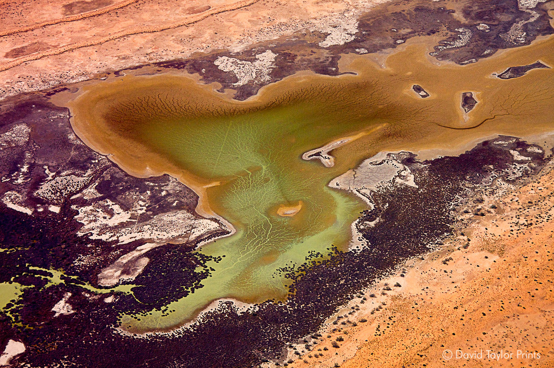 Abstract Aerial Landscape Photo Print of Simpson Desert Australia by David Taylor