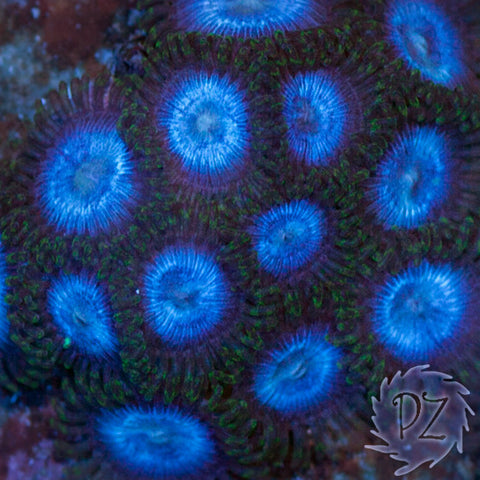 Planet Zoa - Cut-to-Order