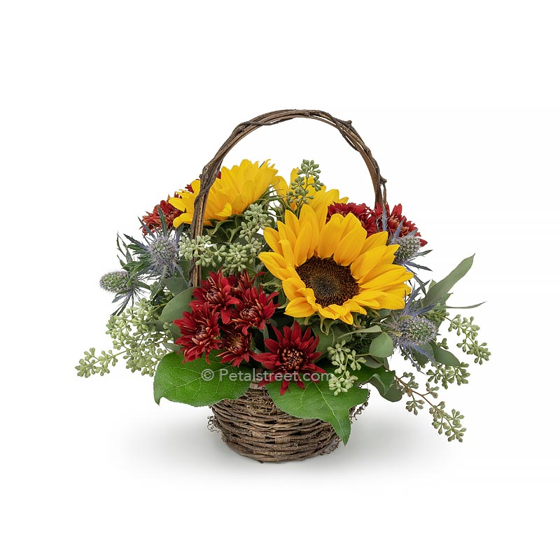 Sunflowers, Mums, and Eucalyptus arranged in a  basket for Autumn.