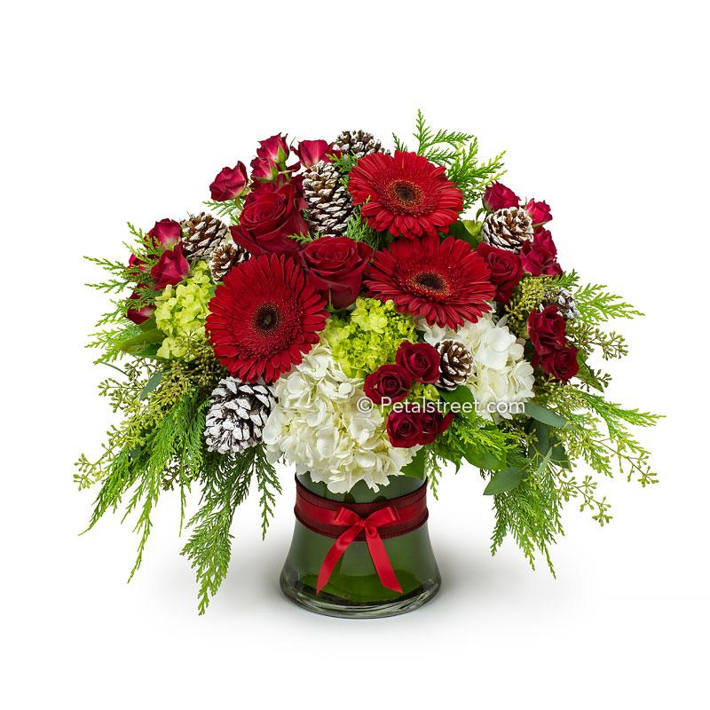 Large Christmas vase arrangement with red Gerbera Daisies, red Roses, green and white Hydrangea, frosted Pine Cones, and seasonal greens.