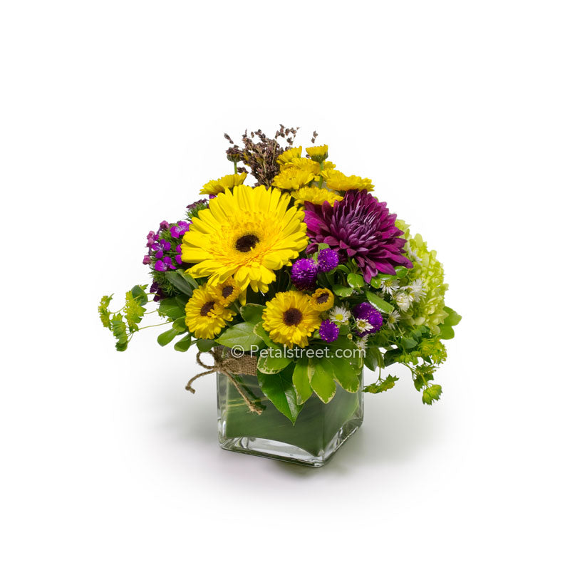 Compact Fall flower arrangement with yellow Gerbera Daisy and burgundy Mums in a cube vase.