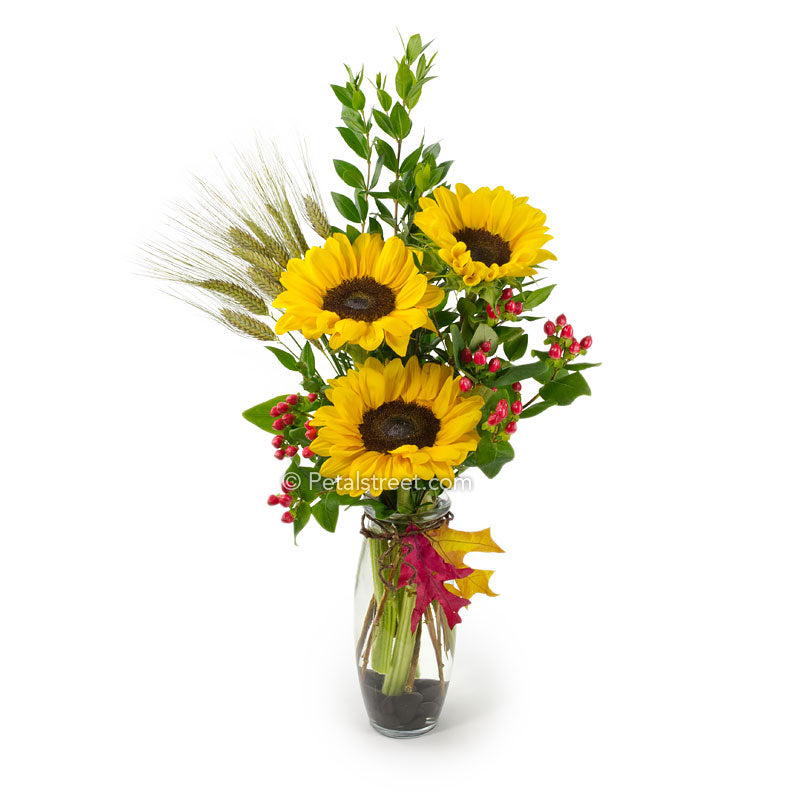 Sunflowers arranged in a glass vase with red Berries and colorful Oak Leaf and Wheat accents for Fall.