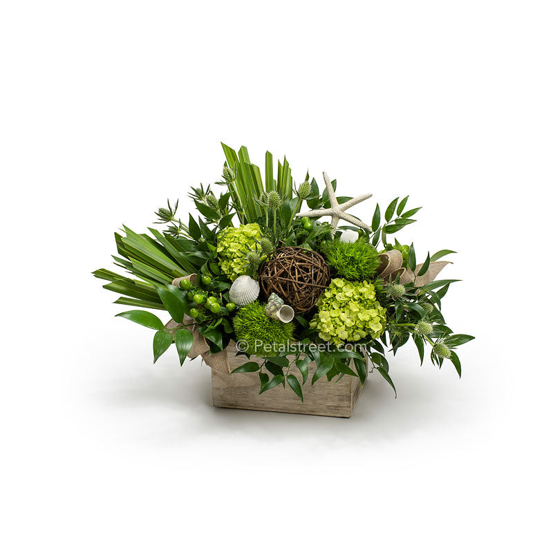 Sea shell flower arrangement for delivery, features hydrangea, green trick, thistle, hypericum berries, fan palm, and ruscus leaves, with starfish and sea shell accents in a wood box by Petal Street Flower Company florist.