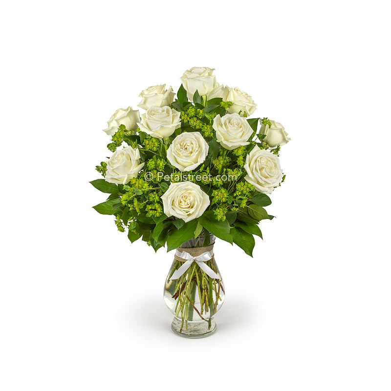 Elegant vase of one dozen white Roses with soft Bupleurum accents and foliage.