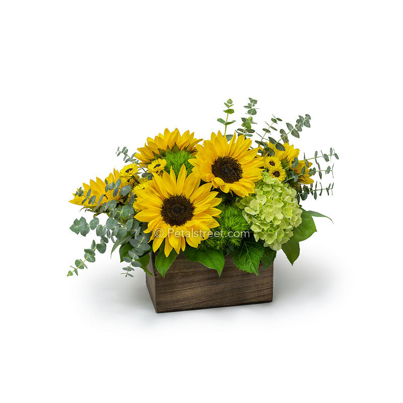 Beautiful Sunflowers arranged in a wood box with Viking Poms, green Hydrangea, Eucalyptus, and foliage accents by petal Street Flower Company florist