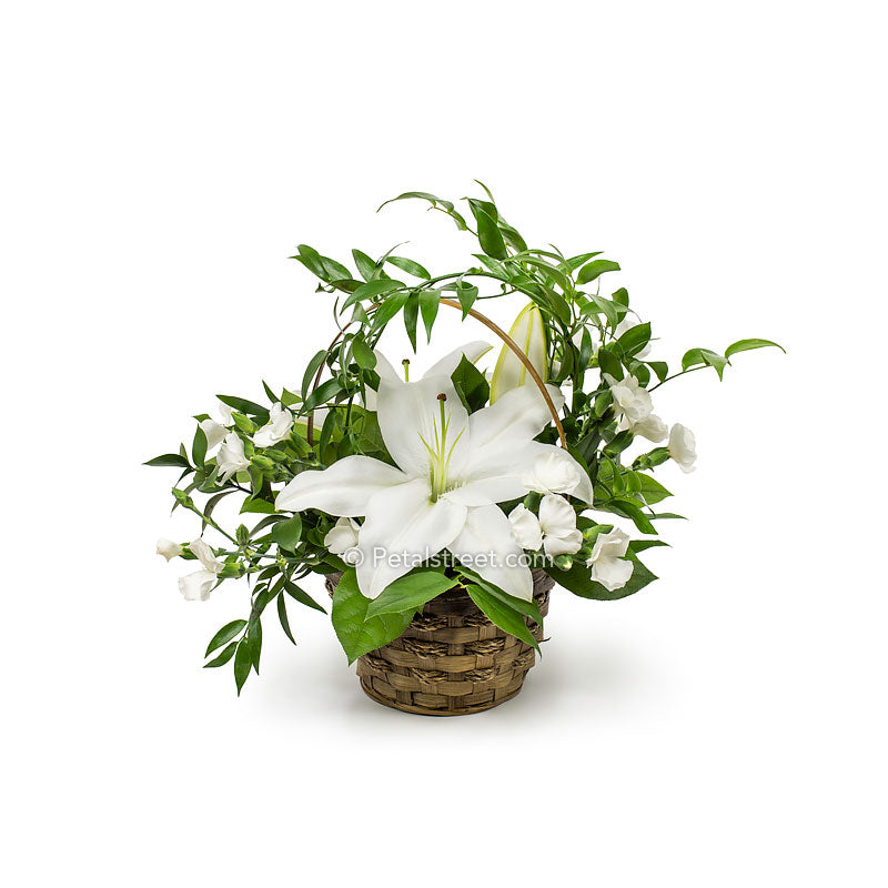 Sympathy flower basket with white Lilies, white accent flowers and lush green foliage by Petal Street Flower Company florist.