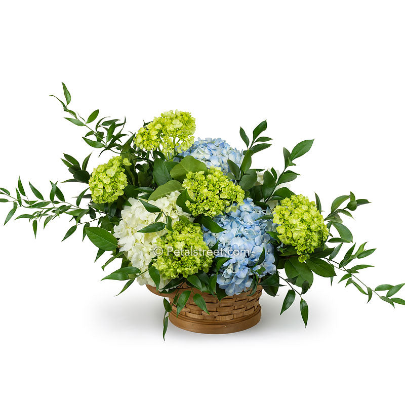 Sympathy flower basket with white, blue, and green Hydrangea with accent foliage.