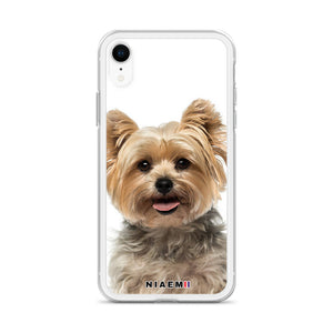 yorkshire terrier price