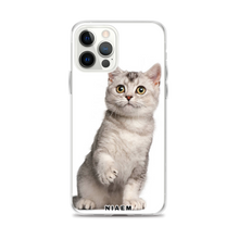 Load image into Gallery viewer, american shorthair colors