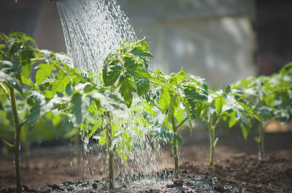 Healthy Garden With Filtered Water