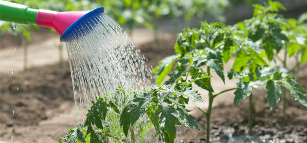 Pure Water for Plants & Herb Gardens