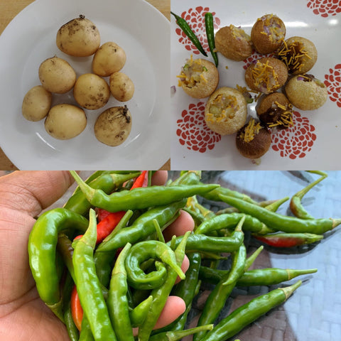 Panipuri, an Indian snack and a favourite dish at the RUN office, made with potatoes and chilis grown by RUN participants!