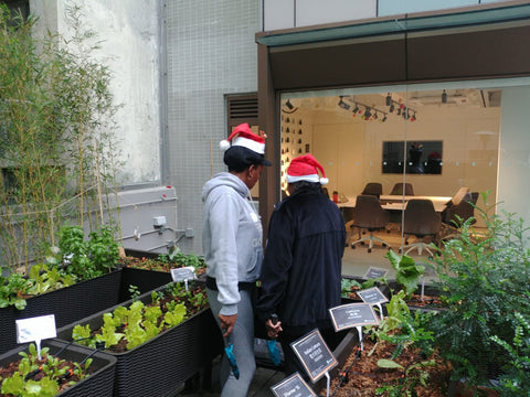 RUN participants tending to the garden at theDesk