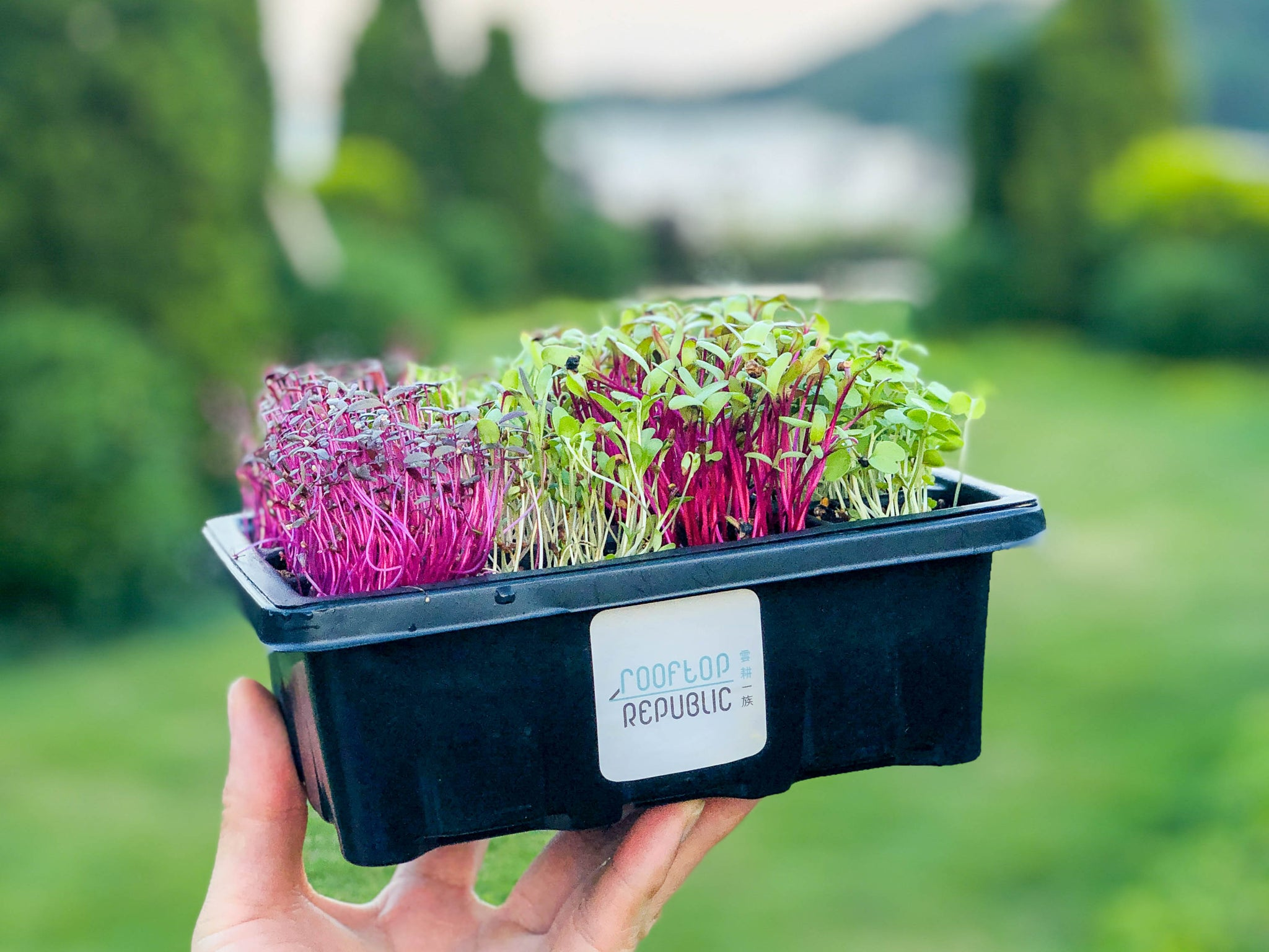 Basic Microgreens Grow Kit | 迷你菜種植套裝