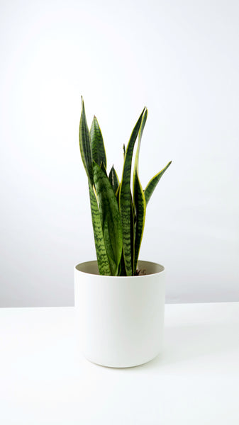White Straight Edged Pot