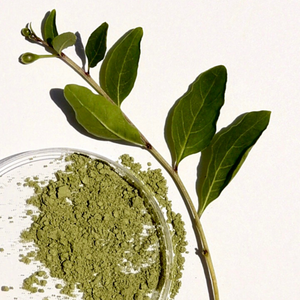 Ingredient Spotlight: Matcha