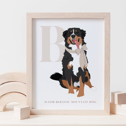 Alphabet Dog Breed - B is for Bernese Mountain Dog