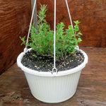 Hanging Herbs - Mediterranean Collection
