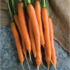Roots - Fresh Carrot Bunch