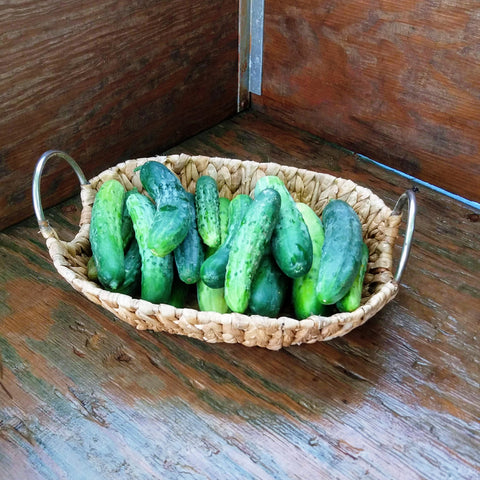 Snacking Cucumbers