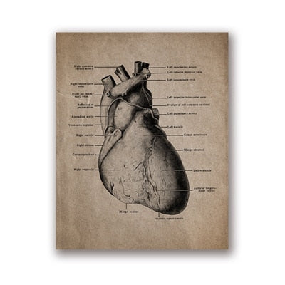 Human Anatomy Skeleton Prints and Posters , Anatomical Skull Wall Art Canvas Painting Vintage Posters Doctor Office Decoration