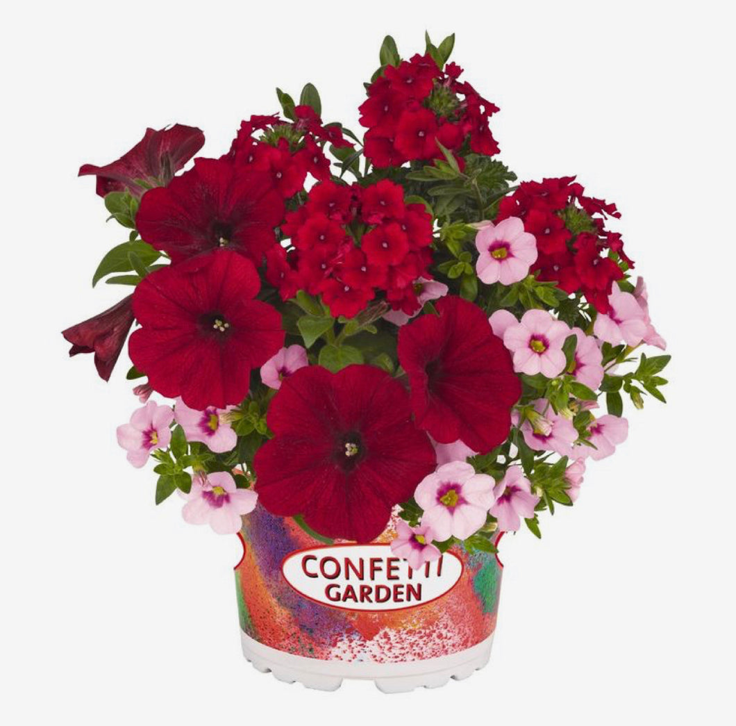 Sun Confetti Rockin' Red Hanging Basket