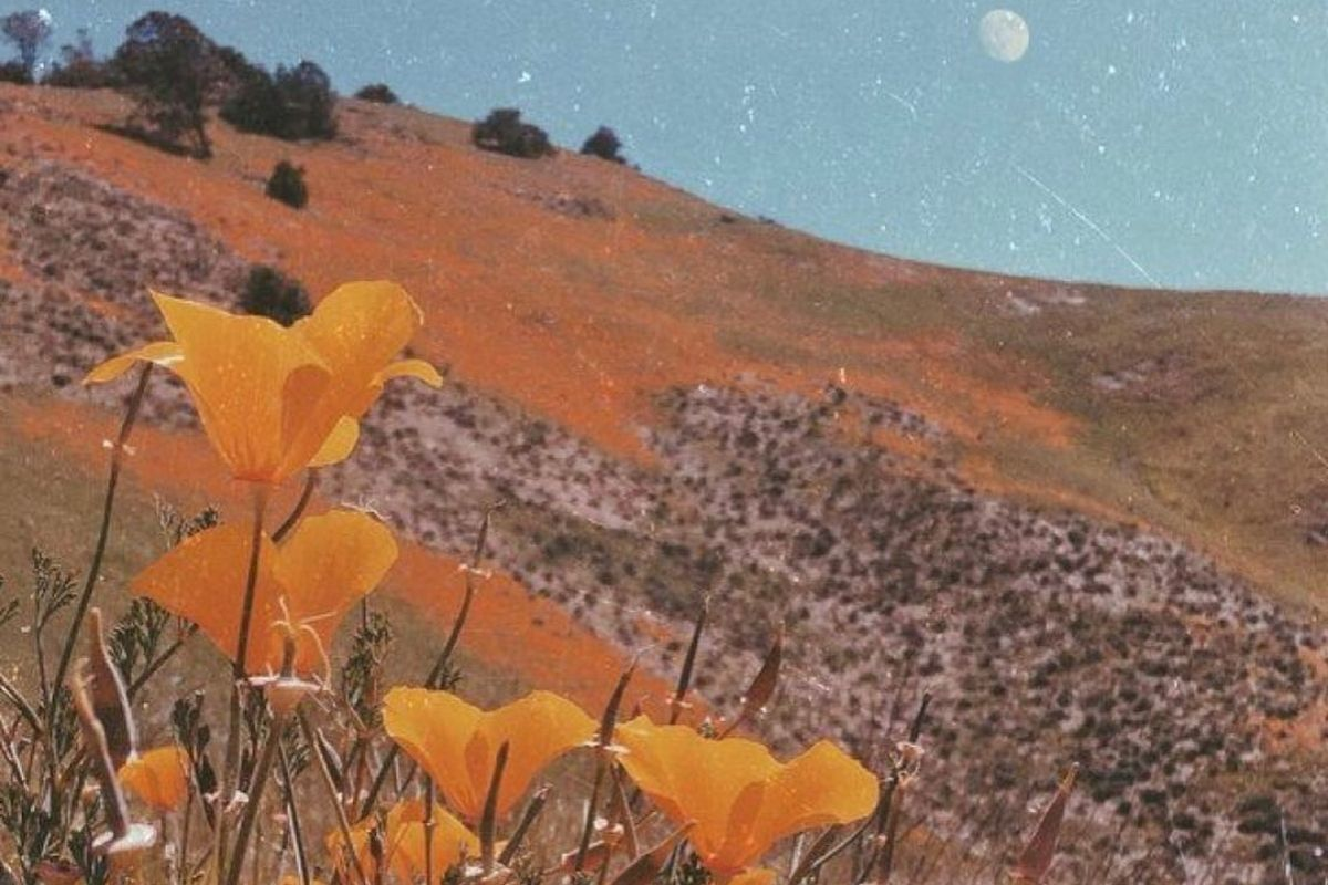 yellow flowers on the hillside beneath the moon