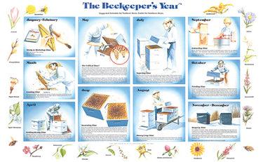 The Beekeeper's Year