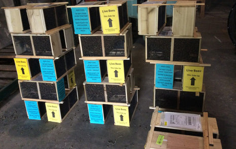 Bulk Quantities of Package Bees
