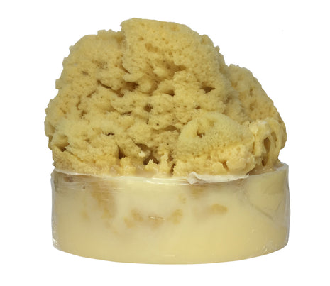 Coconut Mango Soap with Embedded Sea Sponge