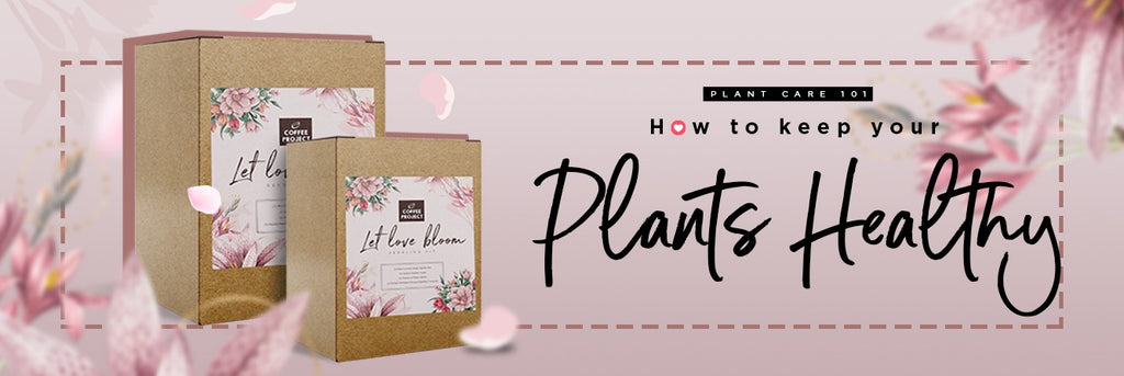 Plant Care Tips 101: How to Keep Your Plants Healthy