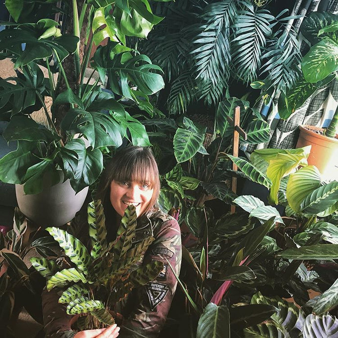 Plant Styling with @calathealove