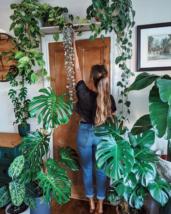 Plant Styling with Monstera Lovin' @JadesJunglegram