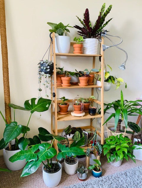Plants as a Healer with @terrarihomes