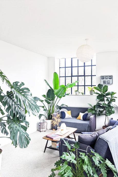 Sustainable Houseplant Ownership with @aconsideredlife