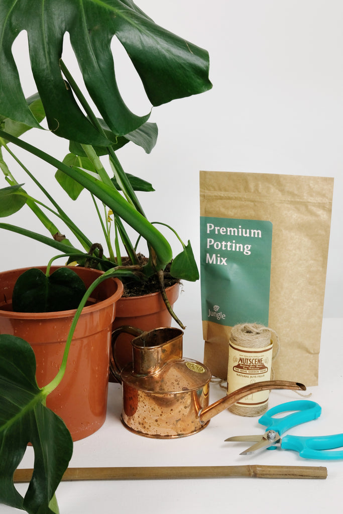 what you need to report a monstera