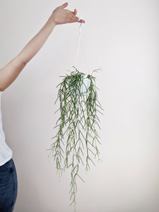 The Trailing Plant Bundle