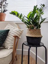 Load image into Gallery viewer, Zamioculcas Zamiifolia | ZZ Plant