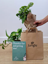 Load image into Gallery viewer, The Instant Jungle (3-10 Plants)